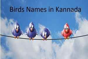 Birds Names in Kannada