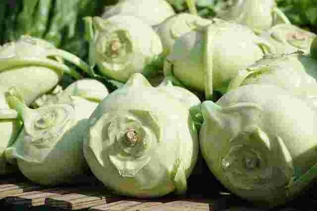 Cabbage turnip